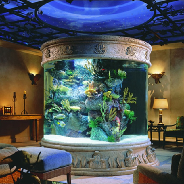 26 best images about craziest fish tanks ever on pinterest - Pictures of cool fish tanks ...