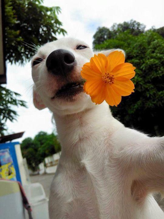 Florescendo.