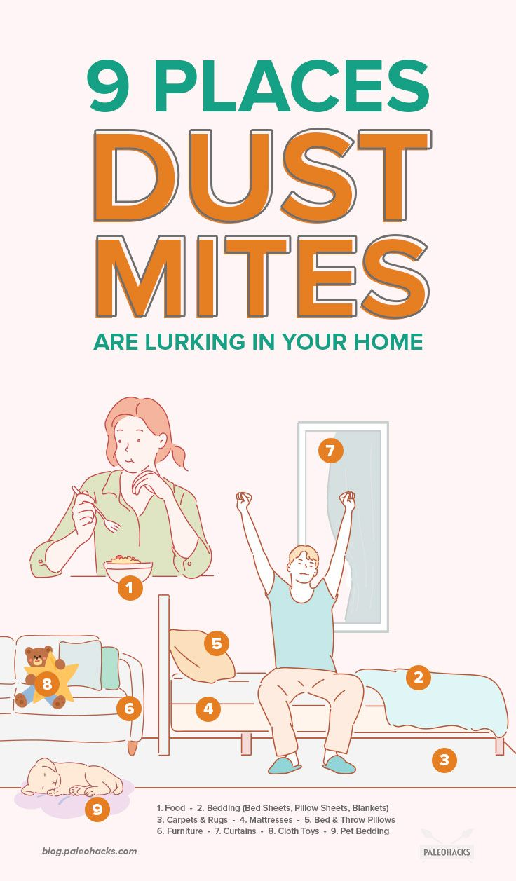 How To Get Rid Of Mold Mites In Kitchen