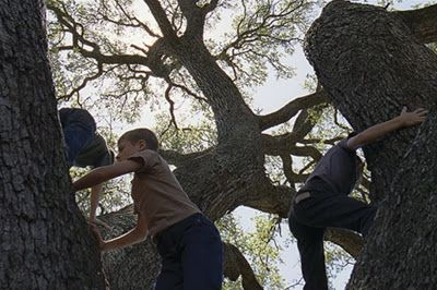 Terrence Malick: The Tree Of Life (2011).