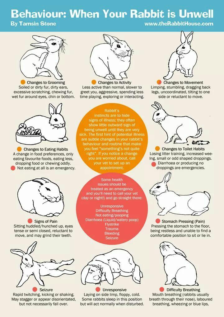 Rabbit Behaviour