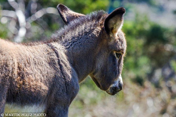 donkey by Martín Pérez on 500px