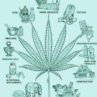 Por la DESPENALIZACION DEL CANNABIS mixtape by MOONLIGHT by SISTASOUNDSATTACK #w33daddict #cannabis #ganja #marijuana #herb #higrade #Hash #Pot #music #☠