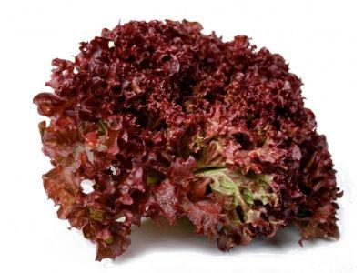 Lola Rossa / La kg. Salata verde este un aliment care revigorează și curăță organismul. Frunzele de salată stimulează digestia și metabolismul, intensifică tranzitul intestinal.  Site oficial: http://agro-shop.md/ Pagină oficială facebook: https://www.facebook.com/agro.shop.md/?fref=ts Grup pe facebook: https://www.facebook.com/groups/AgroShop/ OK: https://m.ok.ru/group/53798588186862?__dp=y YouTube.com : https://www.youtube.com/channel/UCi7hRdYuY77cUCI7tmNL5qg