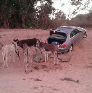 Photos: South African Police intercept vehicle being smuggled into Zimbabwe with the aid of donkeys http://ift.tt/2u0zDC9
