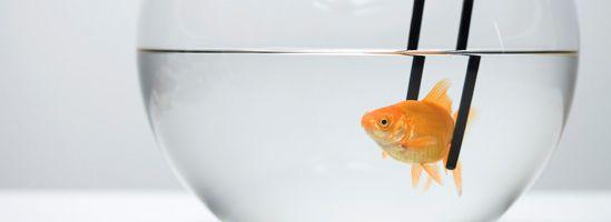 DEN RÅ FISKS HEMMELIGHED…