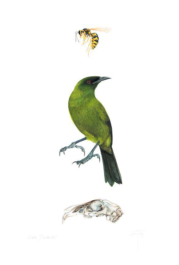 'Little Death II' 2014 ©Helen Taylor New Zealand Bellbird