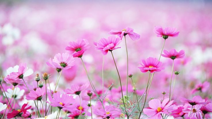 цветочки :3