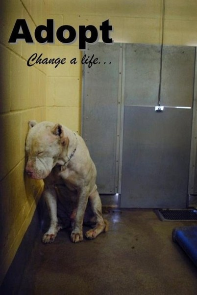 I just want to hug him!!!! Thanks to all the thugs in the world that give these poor pitbulls a bad name & how they are treated, so because of this stupidity! Save a pitbull they didn't ask to be raised this way, they just want to be loved just like any other dog..Please help stop the abuse of pits & all animals