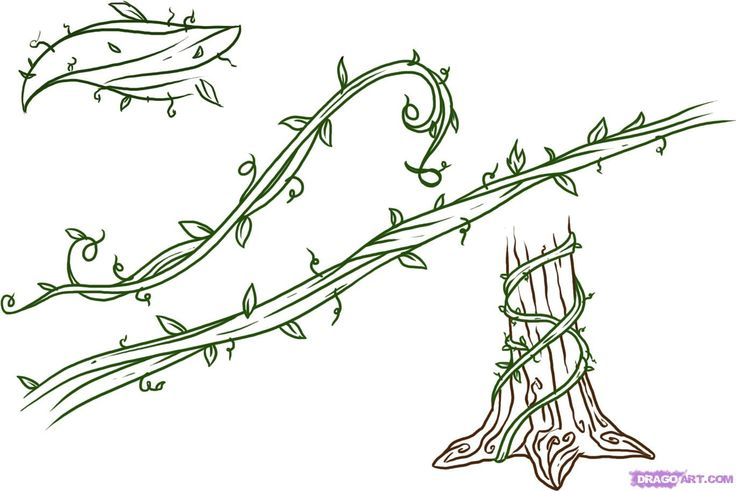 Line Art Vines : Drawings of flowers leaves and vines to draw step