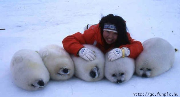 baby seals. I want to be her right now!
