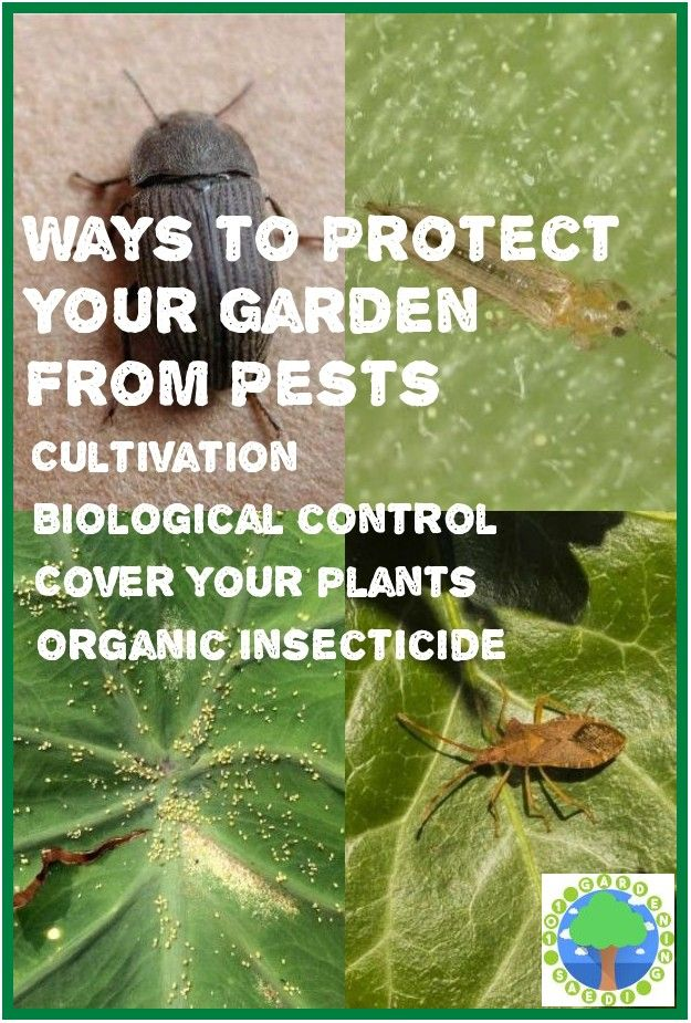 Safe And Effective Ways Of Natural Pest Control In 2020 Natural Pest Control Pests Organic Plants