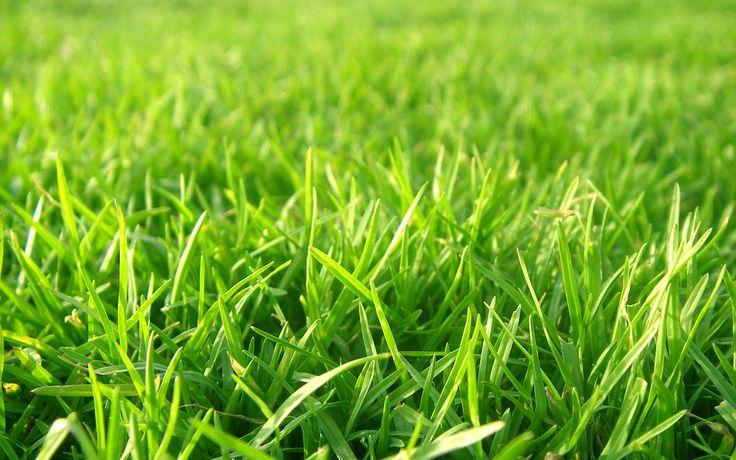 Gras komt in vele tuinen voor. Van grote tot kleine oppervlaktes. In dit artikel leg ik uit hoe je geniet van een prachtig groen gazon.