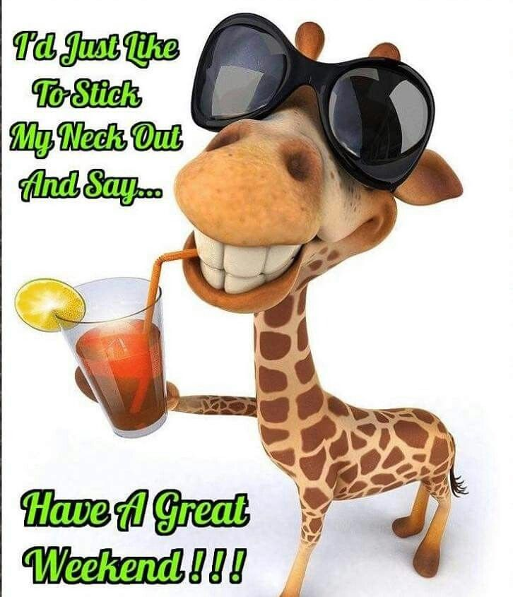 Have A Great Weekend Great Weekend Quotes Morning Quotes Funny Good Morning Funny