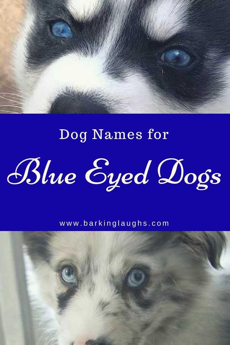 99 Names For Border Collies Male Dog Names Boy Dog Names