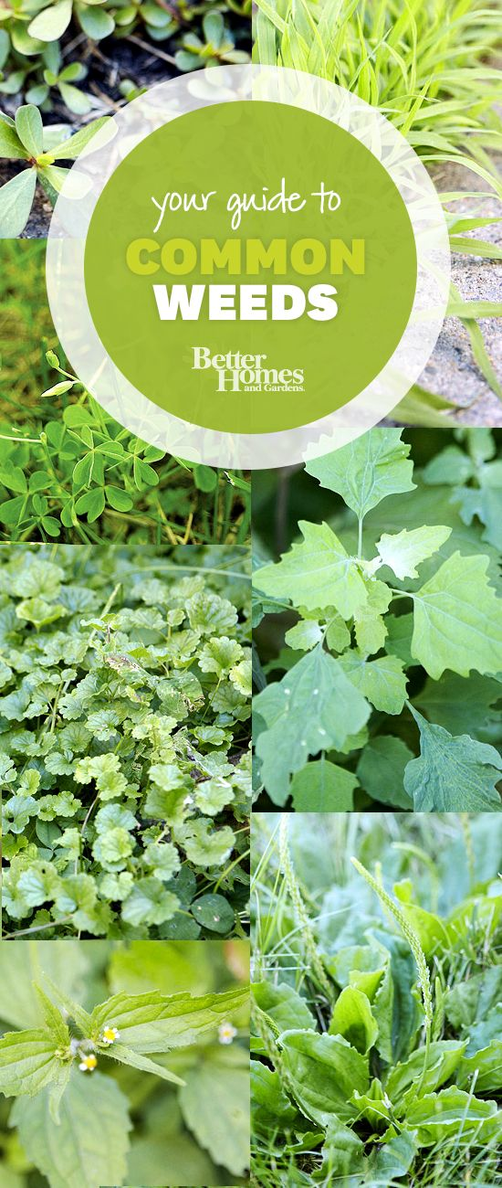Use our handy guide to help you identify and control weeds in your garden by bhg #Gardening #Weed_Identification_Guide