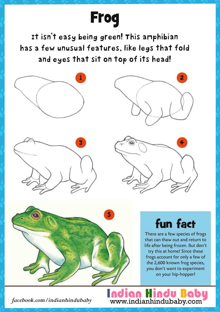 Teach your kid to draw and paint Frog with simple drawing tips
