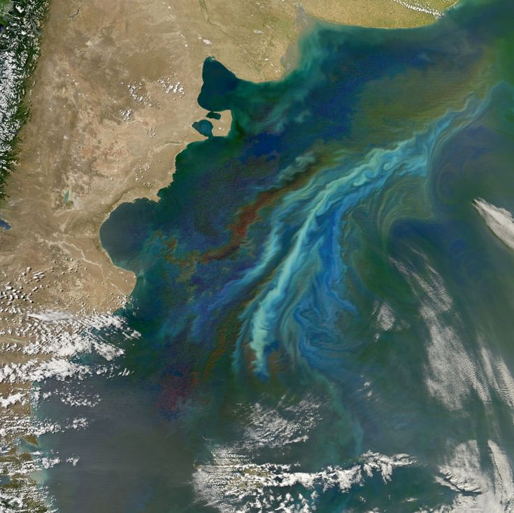 This massive phytoplankton bloom off the coast of Argentinian Patagonia was captured by Aqua on Dec. 21, 2010.