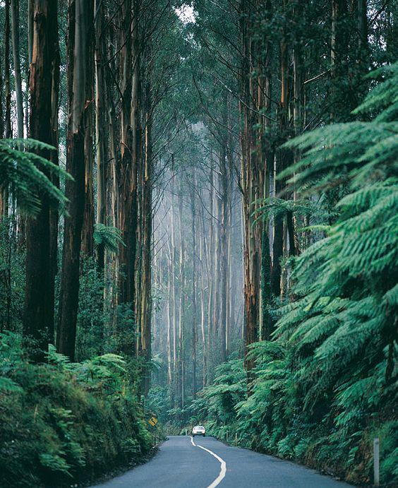 Black Spur Drive - Victoria, Australia