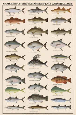 Game fish of the saltwater flats and shallows poster for Saltwater fish representative species
