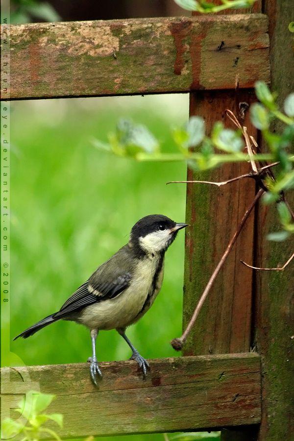 tout petit oiseau a sa place dans mon Eden !