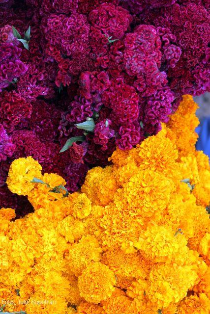 Colores de México. Flores de Dia de muertos: Cordón de obispo y cempoalxóchitl.