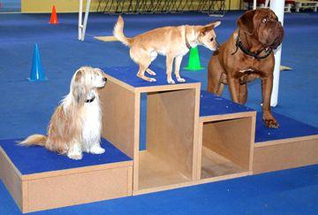 Školka pro psy - krytá hala