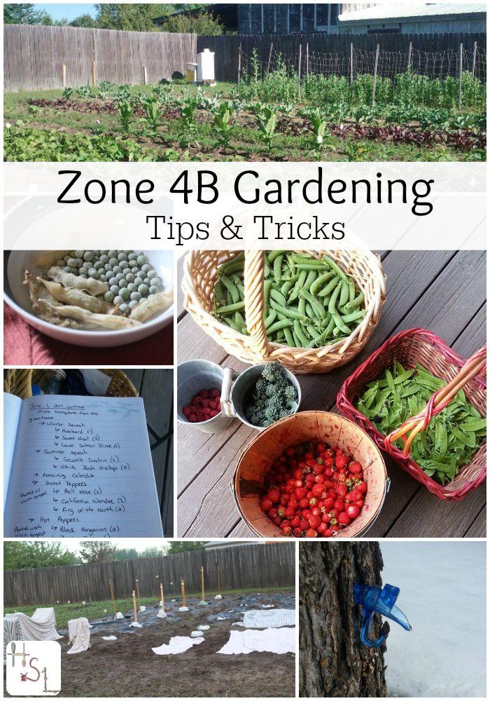 zone 4b gardening