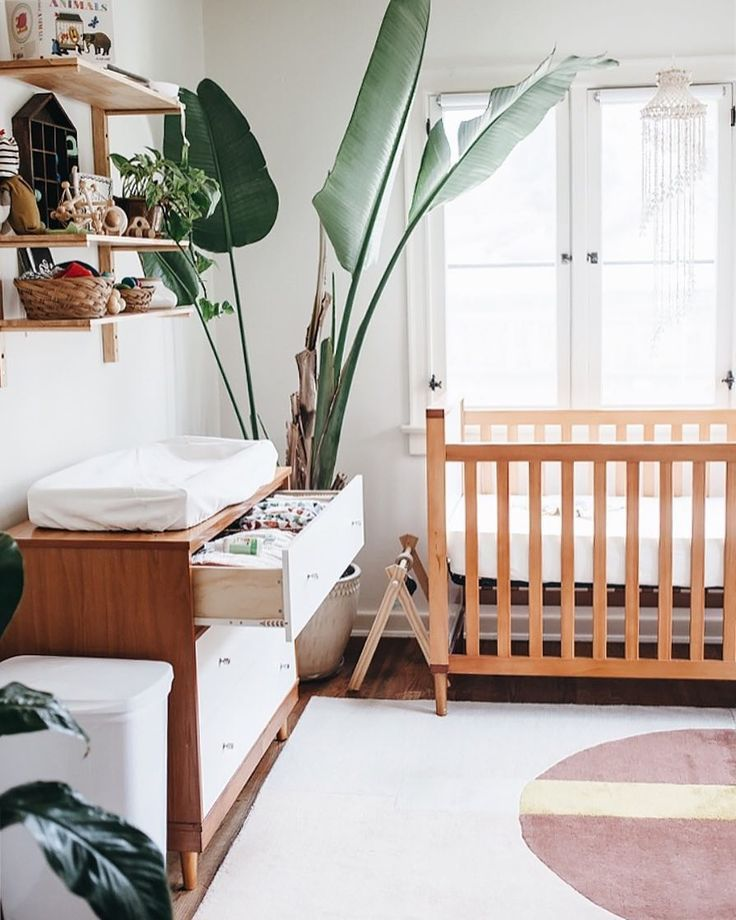 lovely nursery with white walls, natural wood crib and dresser, giant plant in corner, wood shelves above changing table