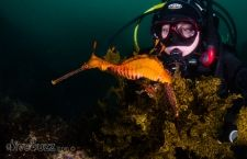 Ocean Trek, temperate water liveaboard diving in Jervis Bay, NSW Australia. Serendipity on our doorstep! Evo, Praveen, Renee, Gareth and myself saw some weedy sea dragons, a massive bull ray, baby Port Jackson sharks, Great white sharks tooth-eek!  May 2012