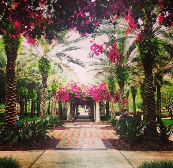 University of South Florida, so excited to live here:)