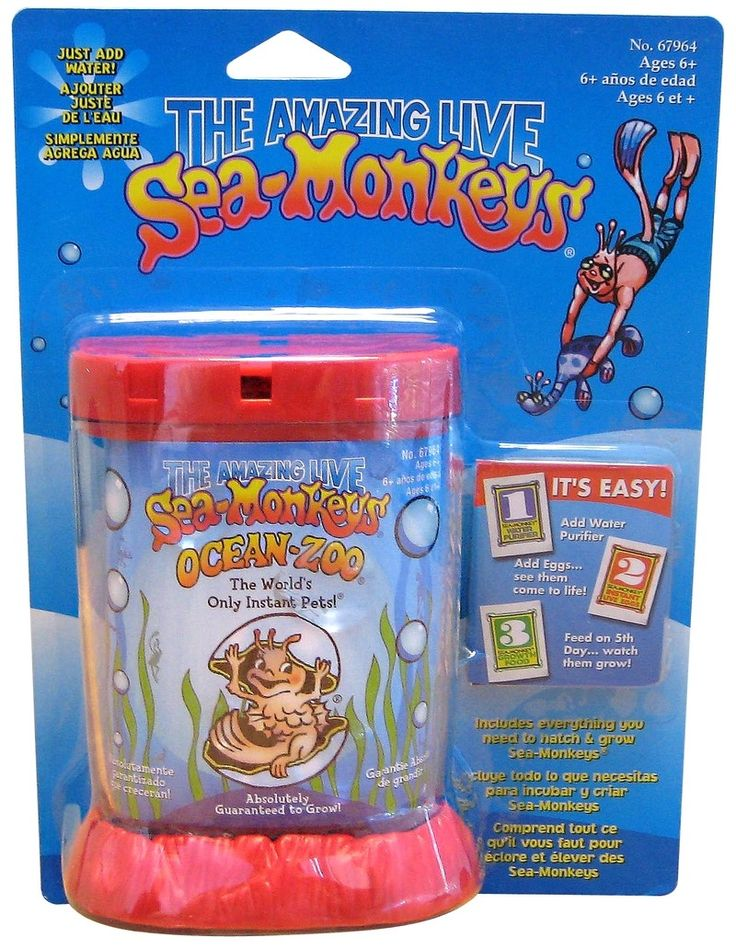 Sea Monkeys - are really brine shrimp, but we all loved them anyway.