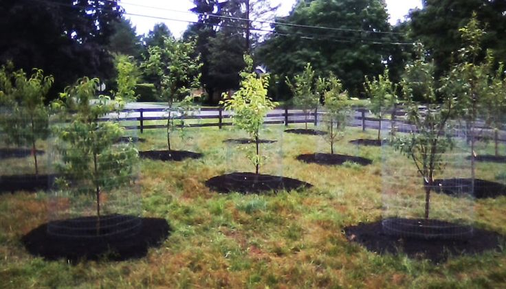 We also offer drip irrigation systems for help establishing and maintaining the orchard and gardens, and pruning to rejuvinate old orchards. Description from ferncreekdesign.org. I searched for this on bing.com/images