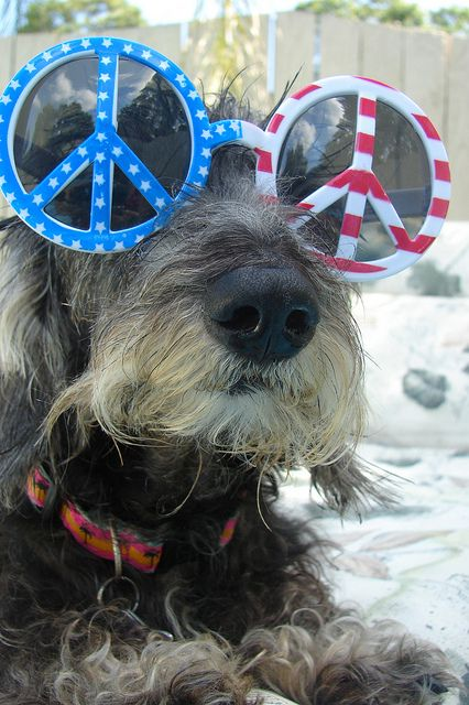 Image result for 4th of july animals