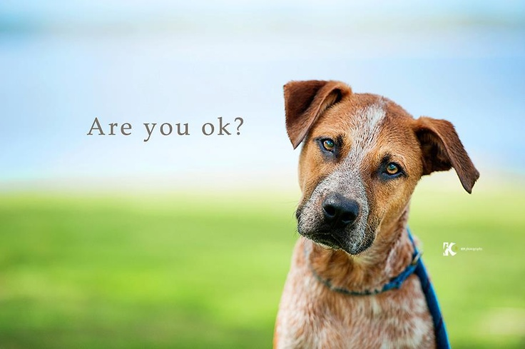TOMORROW is National R U OK Day    Supporting each other through life's ups and downs is as easy as asking one simple question ...     Are you ok?     By sharing this image, you might just lift someone's spirits.