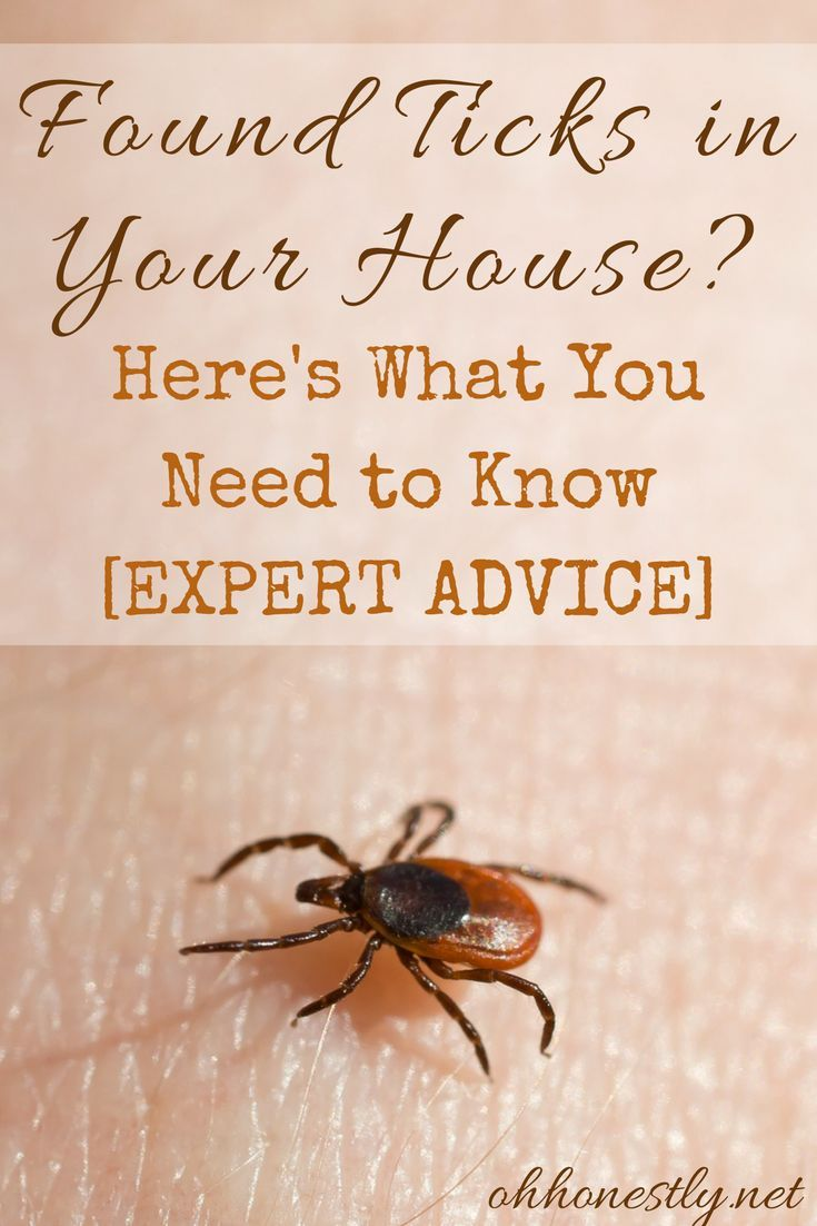 d0754ec972154b5ed757dd80a2b165f9 - How To Get Rid Of Ticks In Your Bed