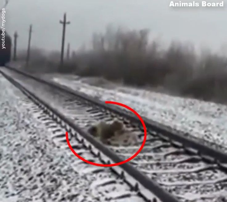 Canine Saved Life Of One other Canine