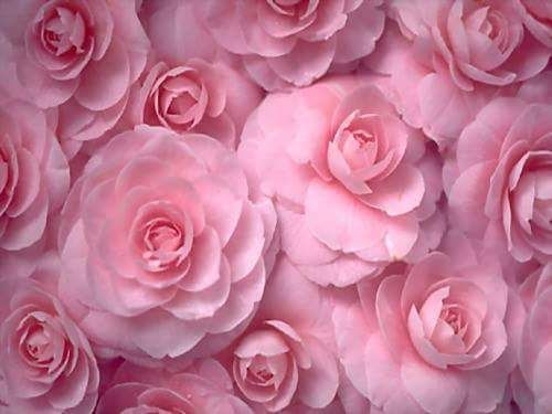1000+ images about Beautiful Roses on Pinterest | Yellow ...