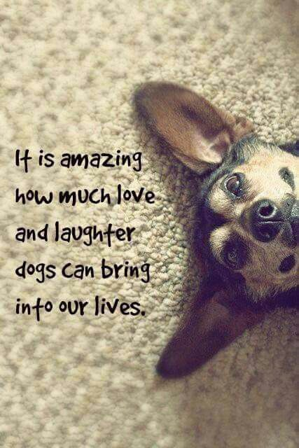 It is amazing how much love and laughter dogs bring into our lives