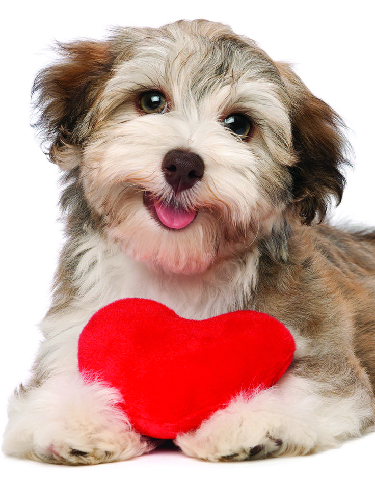 EuroGraphics Dog with Heart 100-Piece Mini Puzzle. This delightful puzzle begs the question? Who can resist these cuddly puppies?