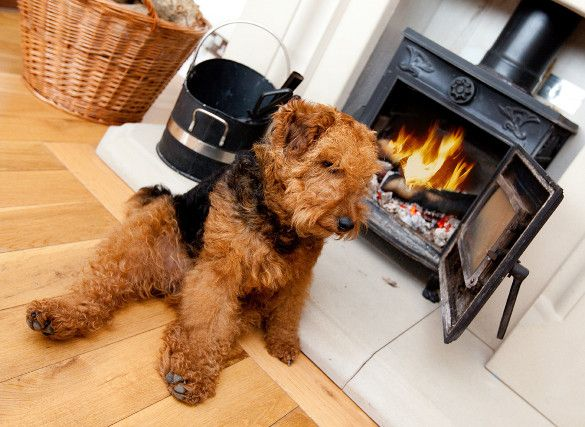 Dog friendly pubs in Cornwall #cornwall #holidaycottages