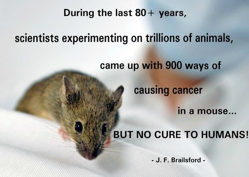Stop animal testing. Alternatives exist, we must demand companies to stop torturing animals today!