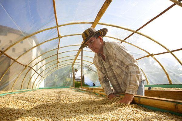Hier wird der Kaffee noch auf ganz natürlichem Wege auf der ökologischen Kaffeefarm Cocondo getrocknet.