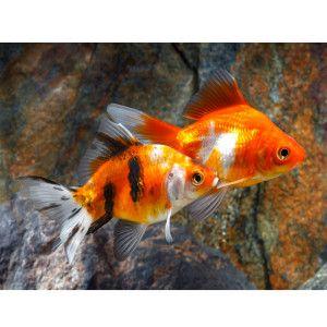 17 best images about fish tank goals on pinterest for Petsmart live fish