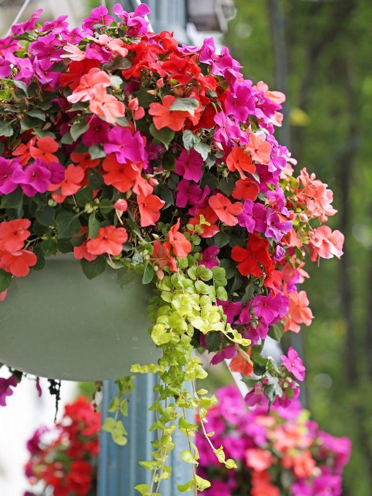 Pin On Hanging Gardens 400 x 300