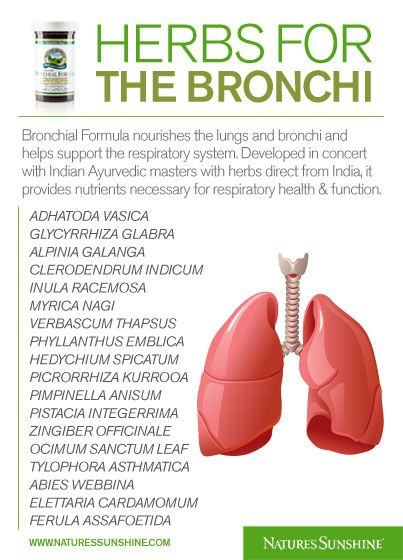 18 Ayurvedic Herbs for the Bronchi and Lungs
