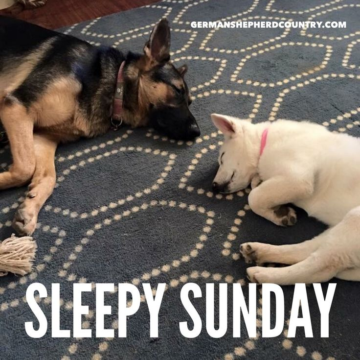 Good Morning Too In German : Best dogs on sunday images pinterest good