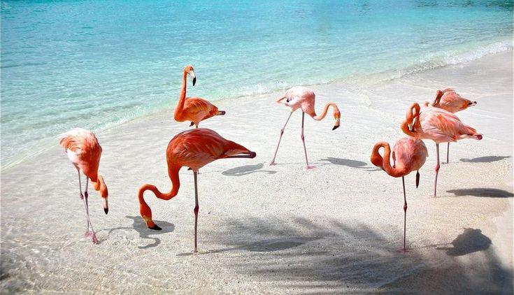 Aruba - Top 5 Islas Paradisiacas Sur Caribe