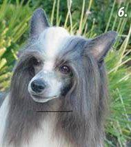 Груминг пуховой китайcкой хохлатой собаки c косметикой Pure Paws