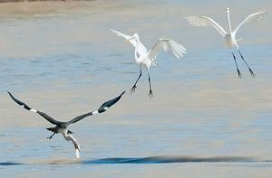 Wild River protection coming to Lake Eyre Basin | The Wilderness Society